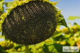 Buy sunflower seeds, plant protection products and fertilizers